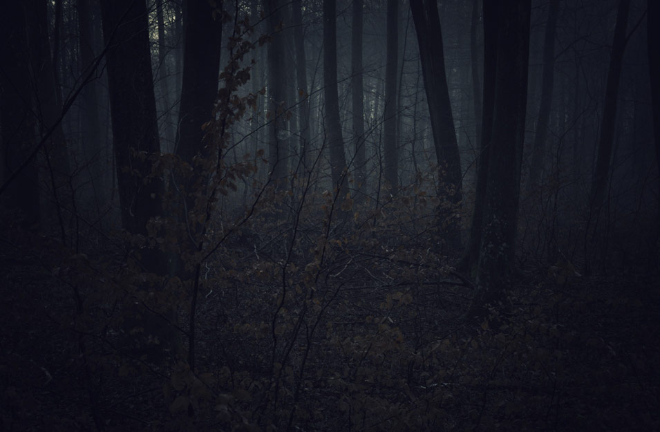 Dark forest, landscape photography by Niels-Jacob Dandanell.